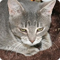 Adopt A Pet :: Cici - Colorado Springs, CO