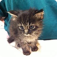Adopt A Pet :: Sampson - Watkinsville, GA