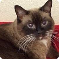 Adopt A Pet :: Daisy - LaJolla, CA