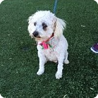Adopt A Pet :: Betsy - Las Vegas, NV