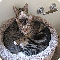 Adopt A Pet :: Zipple & Ripple - Berkeley Hts, NJ