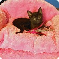 Adopt A Pet :: Zoe - Glendale, AZ