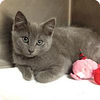 Adopt A Pet :: H-3 male - Triadelphia, WV