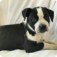 Adopt A Pet :: Molly - Mooresville, NC