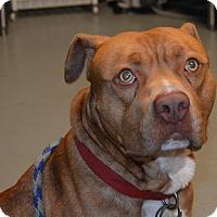 Adopt A Pet :: Tony - Yonkers, NY