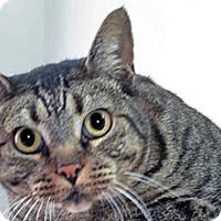 Adopt A Pet :: Andre - Wildomar, CA