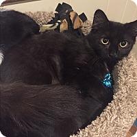 Adopt A Pet :: Rain - Plainville, MA