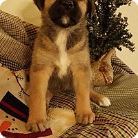 Labrador Retriever Mix Puppy for adoption in Fort Atkinson, Wisconsin - GRACE