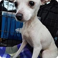 Adopt A Pet :: Winter - Danbury, CT