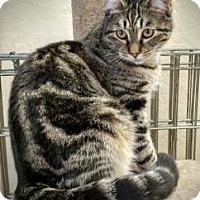 Adopt A Pet :: Marley - San Jose, CA