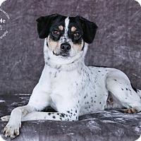 Adopt A Pet :: Napolean - Cincinnati, OH