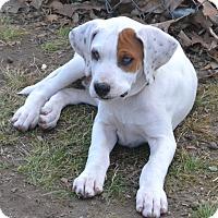 Adopt A Pet :: Maribelle - pending - Manchester, NH