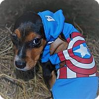 Adopt A Pet :: Capitan America - Waupaca, WI