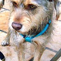 Adopt A Pet :: Einstein - San Diego, CA