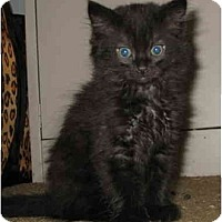 Adopt A Pet :: JJ kitten - Cincinnati, OH