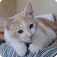 Adopt A Pet :: Marcus - Palmdale, CA