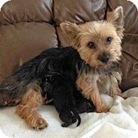 Adopt A Pet :: Sophie - Yakima, WA