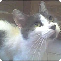 Adopt A Pet :: Geneva - Scottsdale, AZ