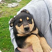 Adopt A Pet :: Rascal - Carey, OH