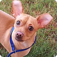 Adopt A Pet :: Clifford - Orlando, FL