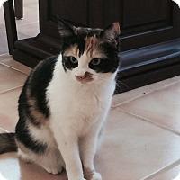 Adopt A Pet :: Scout - Laguna Woods, CA