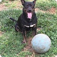 Adopt A Pet :: Sable - Burlington, NJ