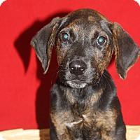 Adopt A Pet :: Larry - Waldorf, MD