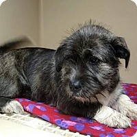 Adopt A Pet :: Wilma B - Lincolnton, NC