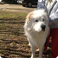 Adopt A Pet :: Pete - Garland, TX