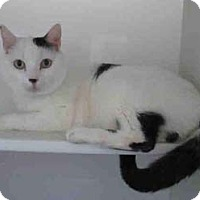Adopt A Pet :: King -may be adopted separate - Merrifield, VA