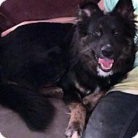 Adopt A Pet :: Meeko-Adopted! - Detroit, MI