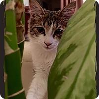 Adopt A Pet :: Morgan - Los Angeles, CA