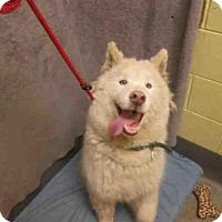 Adopt A Pet :: *ALONZO - Upper Marlboro, MD