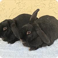 Adopt A Pet :: Tara & Coal - Bonita, CA