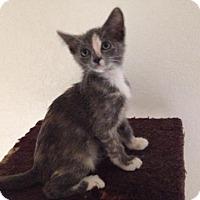 Adopt A Pet :: A379079 Goji - San Antonio, TX