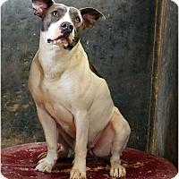 Adopt A Pet :: Laurel - Redlands, CA