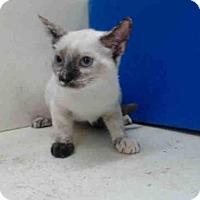 Adopt A Pet :: A354826 - Orlando, FL