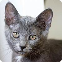 Adopt A Pet :: Izzy - Pasadena, CA