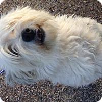 Adopt A Pet :: A024382 - Globe, AZ