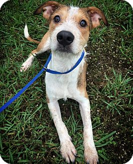 Terrier (Unknown Type, Medium) Mix Dog for adoption in Fredericksburg, Texas - Moe