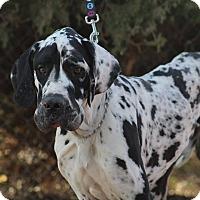 Adopt A Pet :: Sleeve - Lubbock, TX