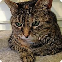 Adopt A Pet :: Gillian - Fairfax, VA