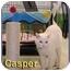 Photo 1 - Domestic Shorthair Cat for adoption in Aldie, Virginia - Casper