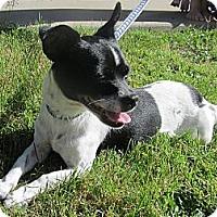 Adopt A Pet :: Sparky - Poway, CA