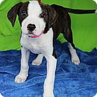 Adopt A Pet :: Feather - Shrewsbury, NJ