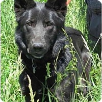 Adopt A Pet :: Lucy - Hamilton, MT