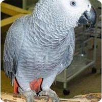 Adopt A Pet :: LUCKY - Mantua, OH