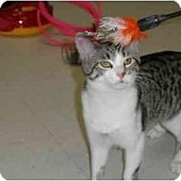 Adopt A Pet :: Della - Milwaukee, WI