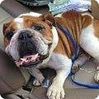 Adopt A Pet :: IVAN - Winder, GA