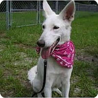 Adopt A Pet :: Sugar - Green Cove Springs, FL
